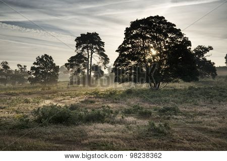 Misty Landscape During Sunrise In English Countryside Landscape