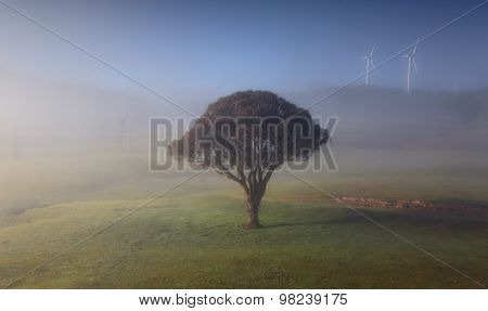 Rolling Hills With Morning Fog Lonely Tree And Windmills
