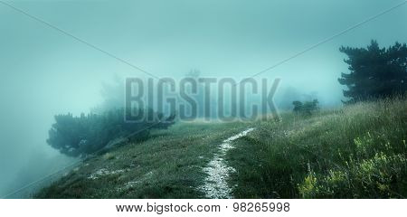 Path through a mysterious dark old forest in fog