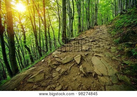 Rocky Forest Trail Path