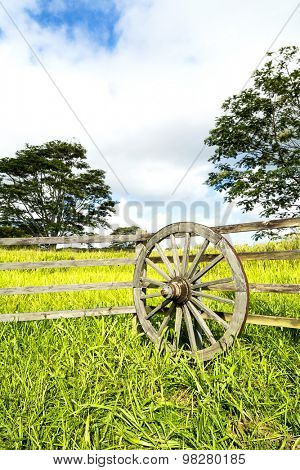 A vibrant, green meadow behind a ranching fence and wagon wheel shows the lush growth in a rural farming community on Kauai Hawaii.