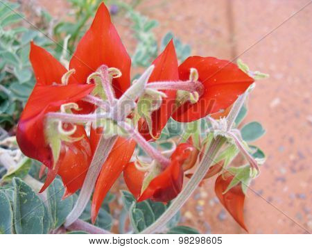 A gloosy blood red flower