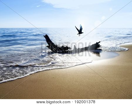 tree trunk on golden color sandy beach and flying seagull over clear sky
