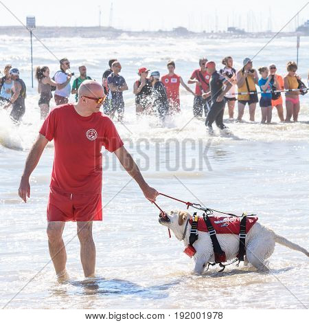 Pescara Italy - June 18 2017: Lifeguard and rescue dog at Ironman 70.3 in Pescara