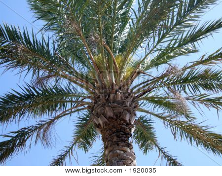 Warm Summer Day - Tropical Palm Tree