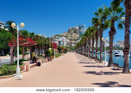Alicante Spain-June 20 2017: Palm-lined seafront promenade in sunny summer day. It is one of the most lovely promenades in Spain