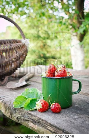 Green Enameled Mug Of Strawberries, Basket, Rake And Shovel On Rustic Table In Garden Outdoors.