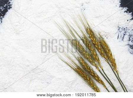 a background of crisp white flour on the table and ears of corn with grains