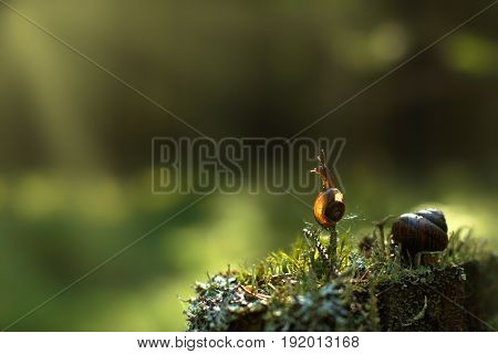 A Small Snail Climbed A Vertical Twig In The Forest And Looks Out Of The Way, Is Illuminated By The