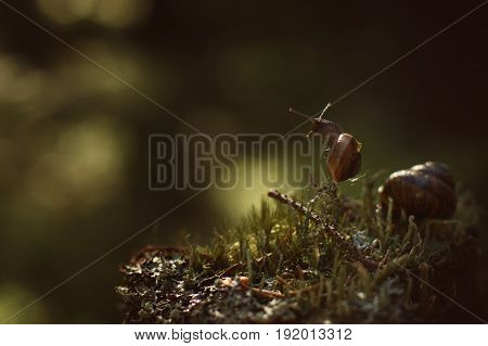 A Small Snail Climbed A Vertical Twig In A Dark Forest And Looks Away