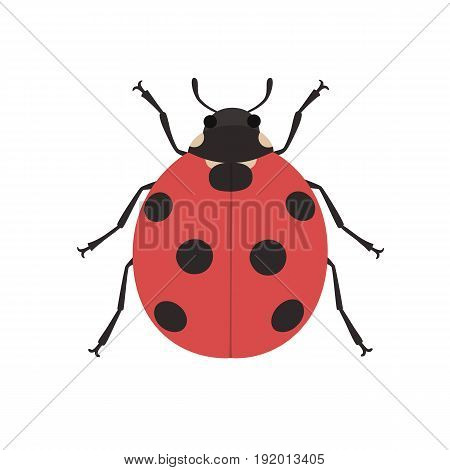 Cute ladybug cartoon. The view from the top. Isolated on white vector illustration
