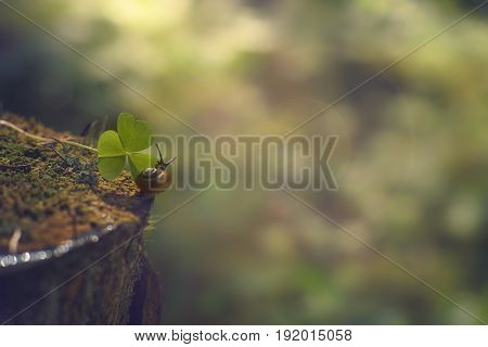 A Small Snail Crawls Along The Stump In The Direction Of The Green Leaf In The Morning Forest, Summe