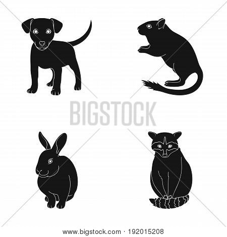 Puppy, rodent, rabbit and other animal species.Animals set collection icons in black style vector symbol stock illustration .