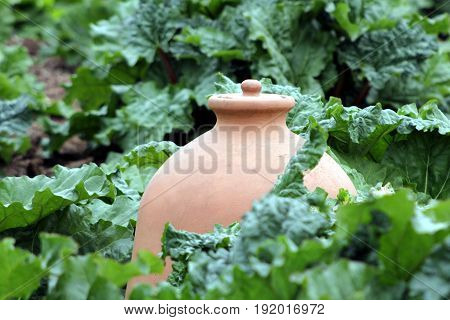 Large Ceramic Terracotta Earthenware Pot Among Rhubarb In A Vegetable Garden