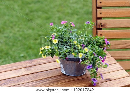 Pretty Trailing Petunias In A Galvanised Bucket On A Wooden Table