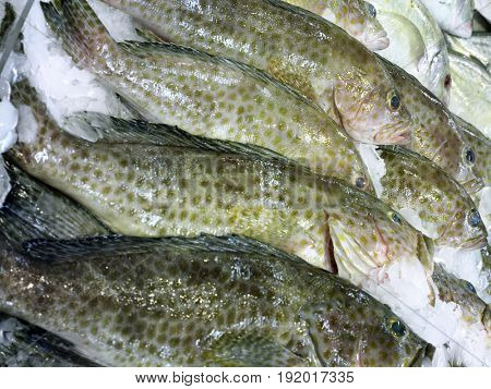 Fish in Marketplace