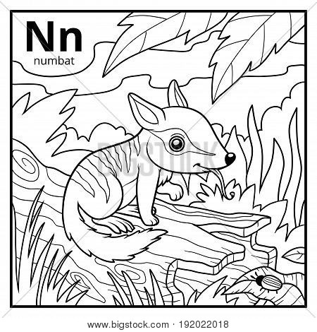 Coloring book for children colorless alphabet. Letter N numbat poster