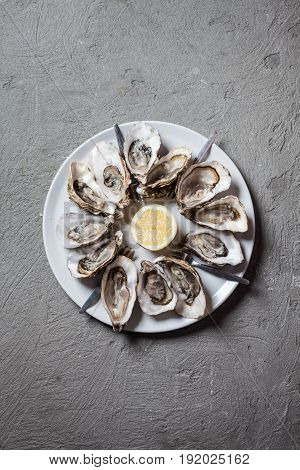 Delicious oysters with slice of lemon, top view with place for text