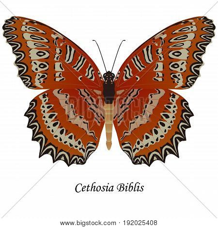 Illustration of India Indonesia butterfly of the Nymphalidae family - Cethosia biblis. Element for design. ClipArt. The element of training patterns biological descriptions etc.