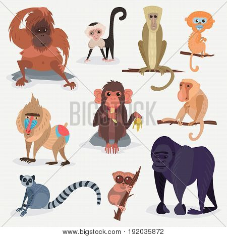 Different monkey character bread animal wild vector cute set illustration. Macaque nature primate cartoon wild zoo cheerful gorilla ape chimpanzee wildlife jungle animal.