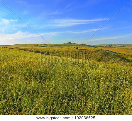 Bright sunny day in the summer. Under the blue sky with small clouds hills and ravines with separate trees in the foreground a dense grass.