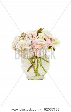 Pink and white roses in vase with isolated background