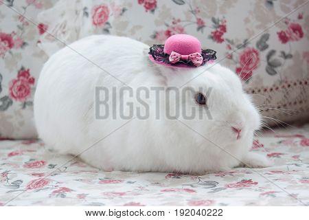 White rabbit in beatuful pink bonnet. Closeup