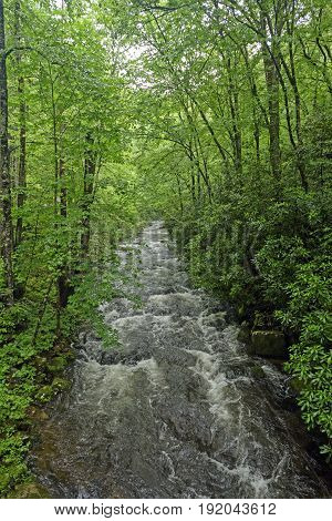 Noland Creek in the Spring in the Great Smoky Mountains in North Carolina