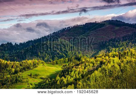 Forest Glade On Mountain Hillside In Cloudy Weather