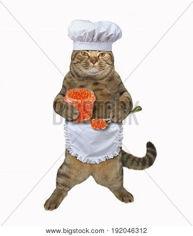 The cat chef is holding a jar of red caviar. White background.