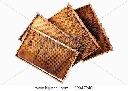 Honey Combs Frames