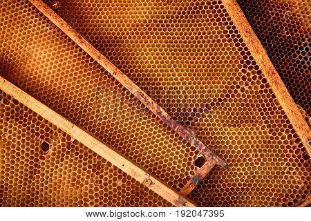 Honey Combs Background