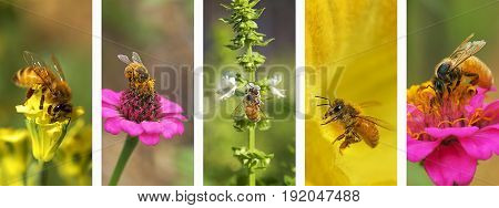 Panoramic nature montage with set of bee photo elements in white frame