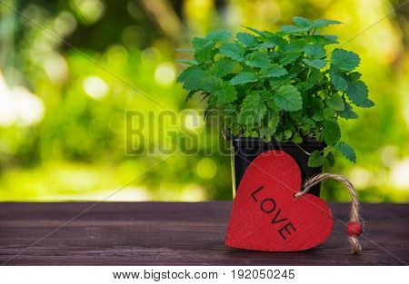 Aromatic mint on a wooden table. Young sprigs of mint on a green blurred background and a red wooden heart. Copy space.