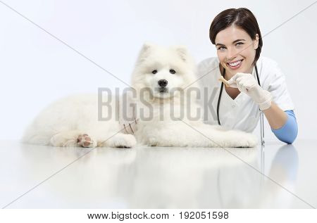smiling Veterinarian with dog and food on table in vet clinic animal diet concept