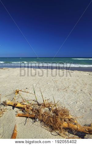 tropical sea beach and old seaweed. Old seaweed and bamboo at foreground