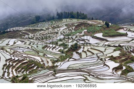 Terraced rice fields in Yuanyang, Yunnan, China. Yuanyang county lies at an altitude ranging from 140 along the Red River up to nearly 3000 metres above sea level in the Ailao mountains.