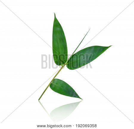green bamboo leaf with shadow isolated on white background