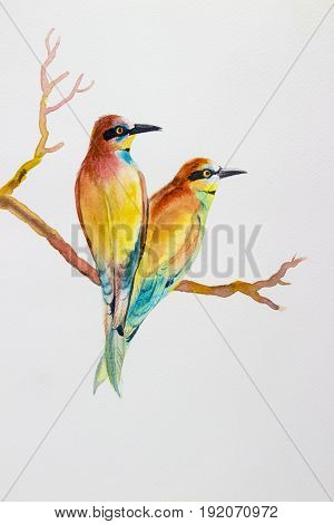 Watercolor bird painting original realistic colorful of bee-eater bird and bird lovers getaway on white background