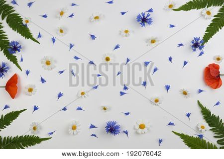 Red field poppies, daisies, cornflowers and green leaves frame on white background. Flat lay, top view