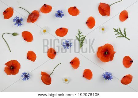 Red field poppies, blue cornflowers and green leaves. Flat lay, top view