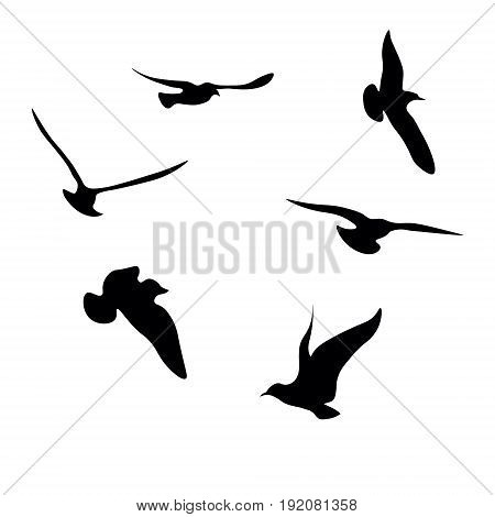Black seagulls silhouettes collection with birds flying in different poses on white background vector illustration