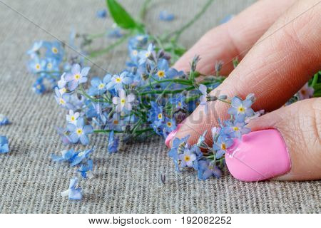 Flowers Forget-me-nots, Closeup Of Female Hand Supports