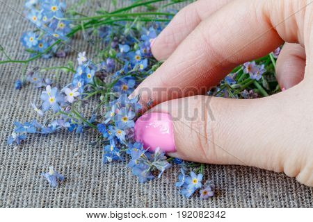 Female Hands Carefully Hold A Forget-me-nots (myosotis) Flowers
