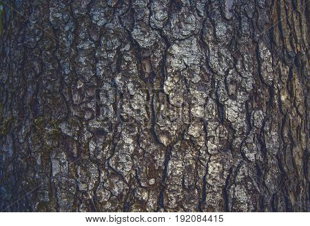 wood bark. the texture of the bark. backgrounds