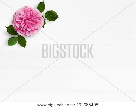 Styled stock photo. Feminine wedding desktop mockup with pink English rose flower and empty space. Floral composition on old white wooden background. Top view, flat lay picture.