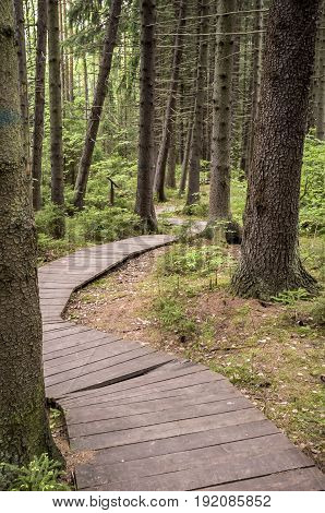 Ecological path made out of wooden planks to walk in summer forest. Vertical version.