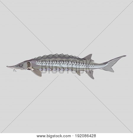 Sturgeon fish logo for fishing clubs restaurants emblems flat style image