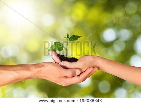 Green holding plant little hands beautiful romance
