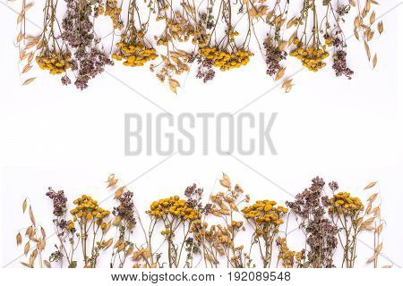 Flat lay border of dry branches of tansy and heather on a white background. Calluna vulgaris and Tanacetum view from above. Medical herb.